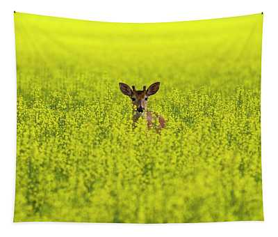 Buck In Canola Tapestry