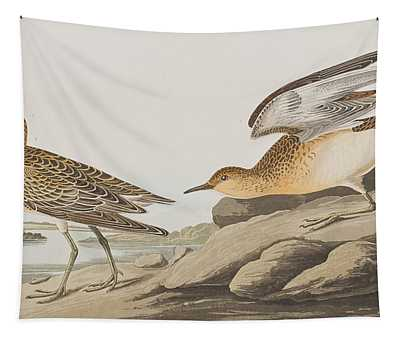 Buff Breasted Sandpiper Tapestry
