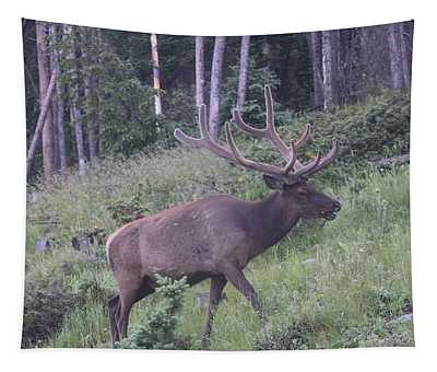 Bull Elk Rocky Mountain Np Co Tapestry