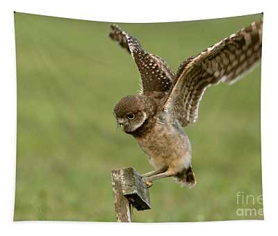 Burrowing Owl - Learning To Fly Tapestry