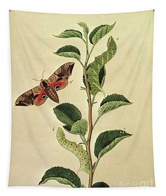 Butterflies, Caterpillars And Plants Plate Xii  Tapestry