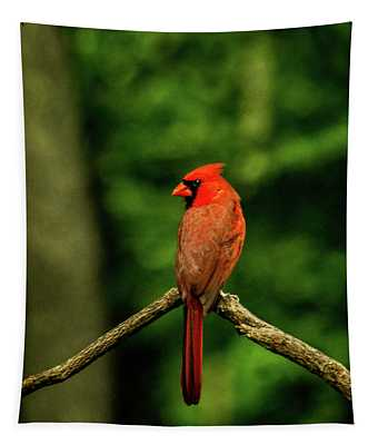 Cardinal Looking Over Shoulder Tapestry