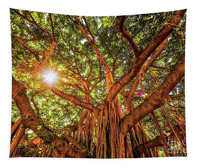 Catch A Sunbeam Under The Banyan Tree Tapestry