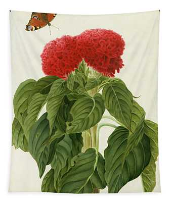 Celosia Argentea Cristata And Butterfly Tapestry