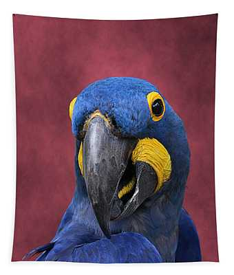 Cheeky Macaw Tapestry