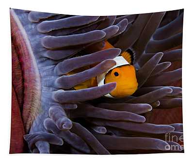 Clownfish And Anemone Tapestry