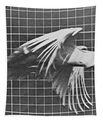 Cockatoo In Flight Tapestry