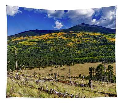 Coconino National Forest In Autumn Tapestry