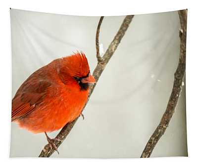 Cold Puffed Cardinal In The Snow Tapestry