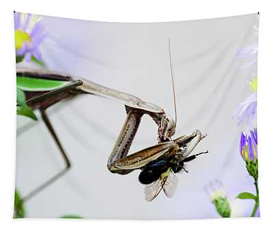Color Mantis Tapestry