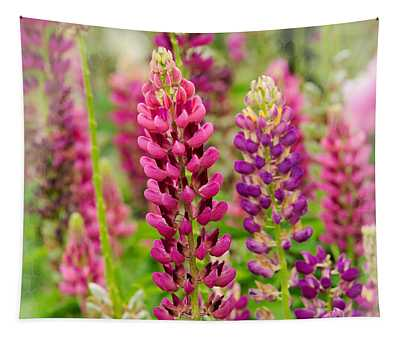 Colorful Lupine Tapestry