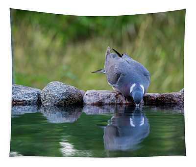 Common Wood Pigeon Drinking At The Waterhole From The Front Tapestry