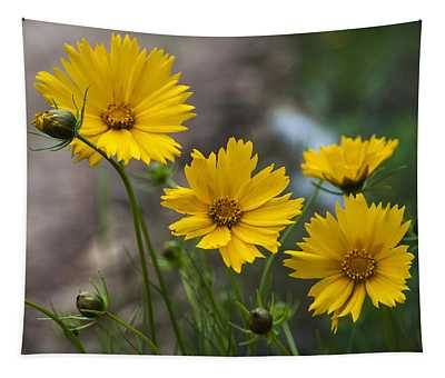 Coreopsis In Bloom Tapestry