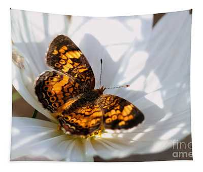 Pearl Crescent Butterfly On White Cosmo Flower Tapestry