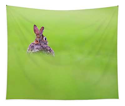 Cottontail In Green Tapestry