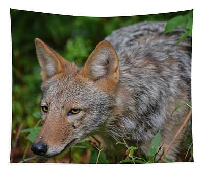 Coyote On The Hunt Tapestry