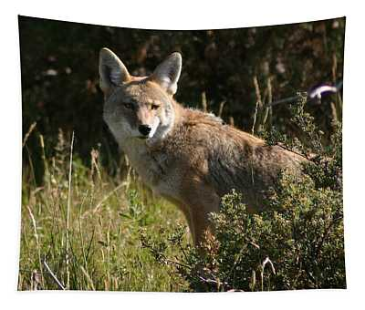 Coyote Resting Tapestry by Perspective Imagery