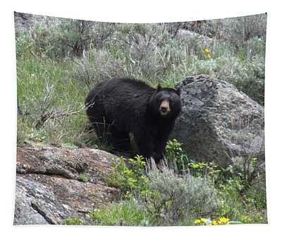 Curious Black Bear Tapestry