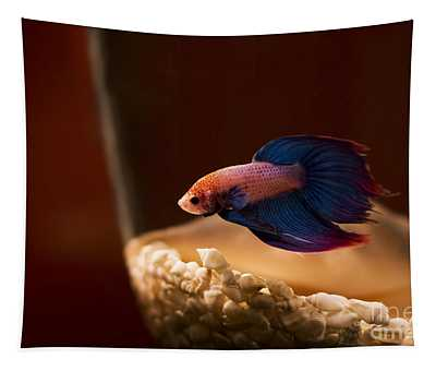 Curious Tropical Fish Tapestry
