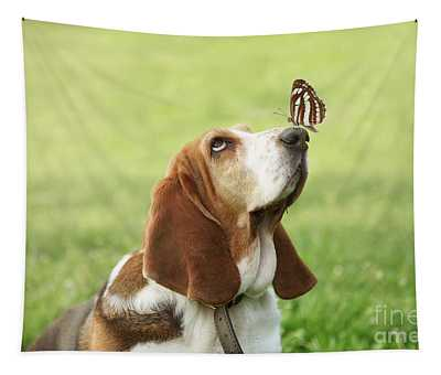 Cute Dog With Butterfly On His Nose Tapestry