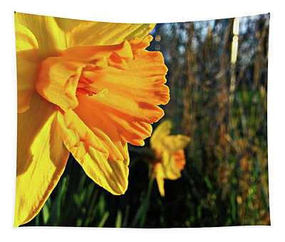 Daffodil Evening Tapestry
