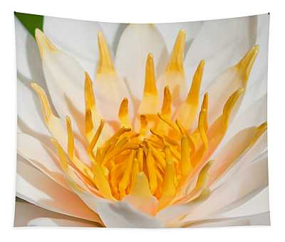 Delicate Touch Tapestry