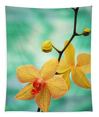 Dendrobium Tapestry