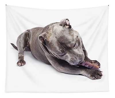 Dog Eating Chew Toy Tapestry