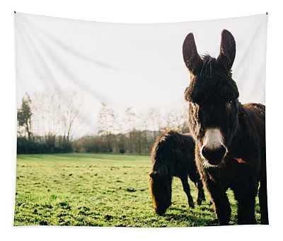 Donkey And Pony Tapestry
