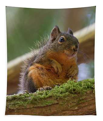 Douglas Squirrel Tapestry