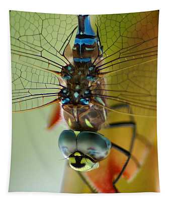 Dragonfly In Thought Tapestry