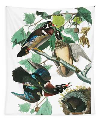 Lummer Or Wood Duck Tapestry
