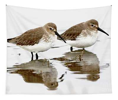 Dunlin Double Tapestry