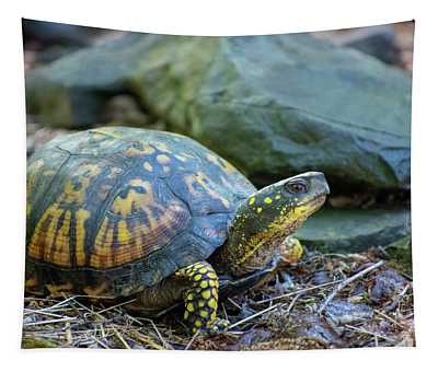 Eastern Box Turtle Tapestry