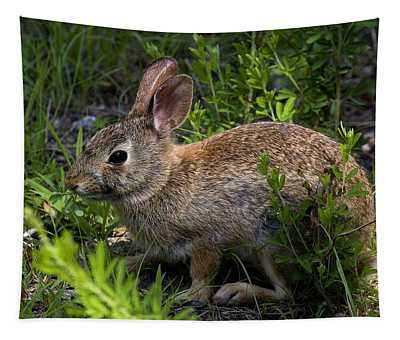 Eastern Cottontail Rabbit Dmam0006 Tapestry