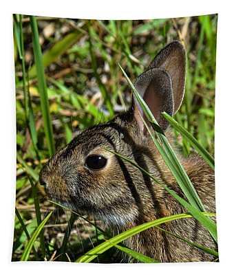Eastern Cottontail Rabbit Dmam0010 Tapestry