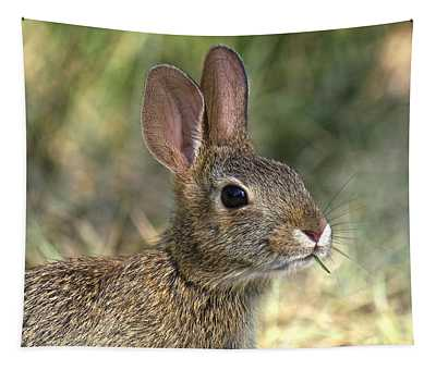 Eastern Cottontail Rabbit Dmam0023 Tapestry