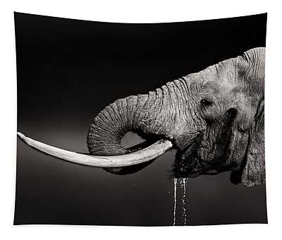 Elephant Bull Drinking Water - Duetone Tapestry