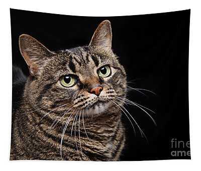 Emmy The Cat Ponder Tapestry