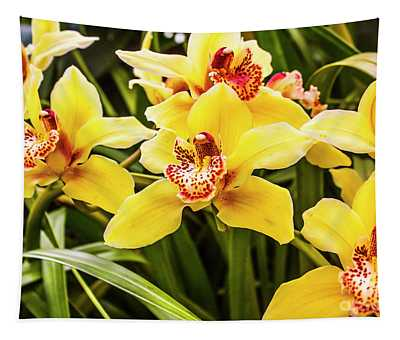 Exotic Orchids  Tapestry