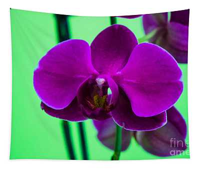 Exposed Orchid Tapestry