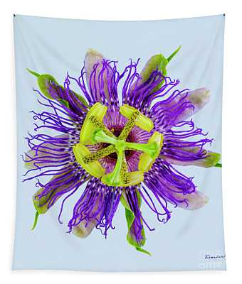Expressive Yellow Green And Violet Passion Flower 50674b Tapestry
