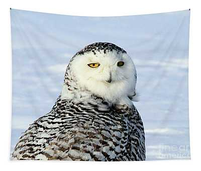 Female Snowy Owl Tapestry