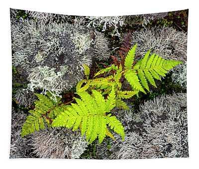 Fern And Lichen Tapestry