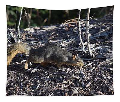 Squirrel Pprh Woodland Park Co Tapestry
