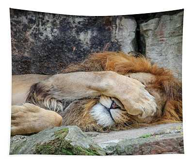 Fort Worth Zoo Sleepy Lion Tapestry