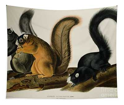 Fox Squirrel Tapestry
