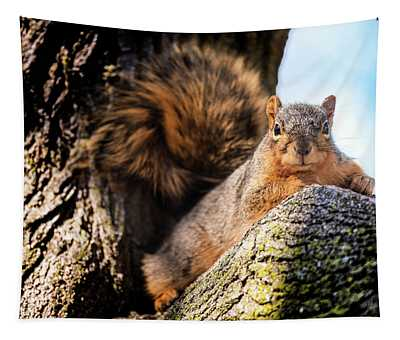 Fox Squirrel Watching Me Tapestry