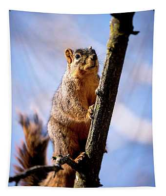 Fox Squirrel's Last Look Tapestry