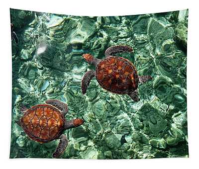 Fragile Underwater World. Sea Turtles In A Crystal Water. Maldives Tapestry